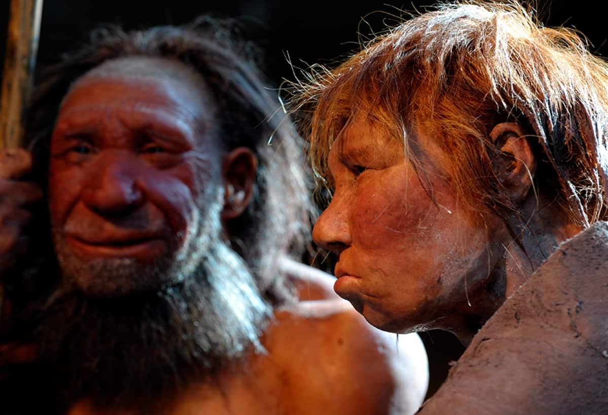 Rekonstruktio neanderthalilaisesta miehestä ja naisesta saksalaisessa museossa.