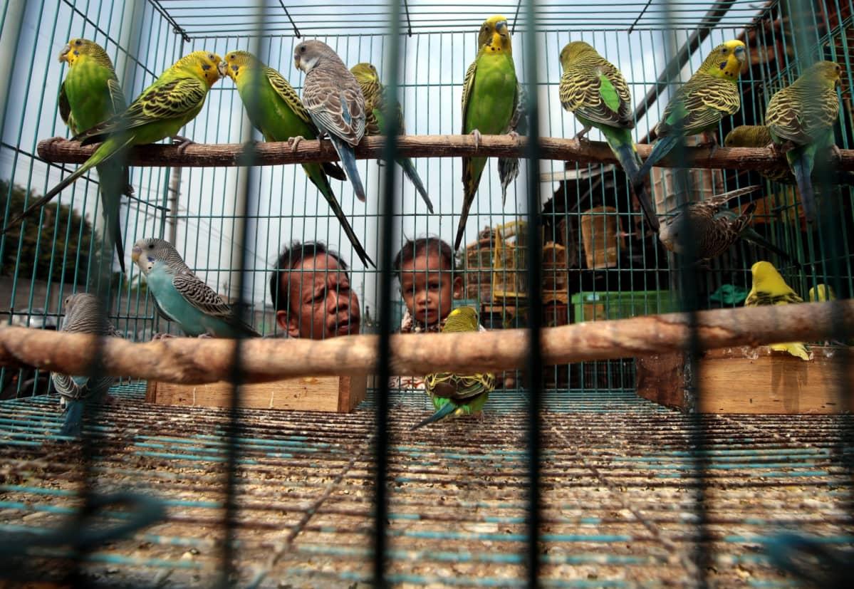 Indonesialainen isä ja lapsi valikoivat papukaijoja lintutorilla Jaavan saarella.