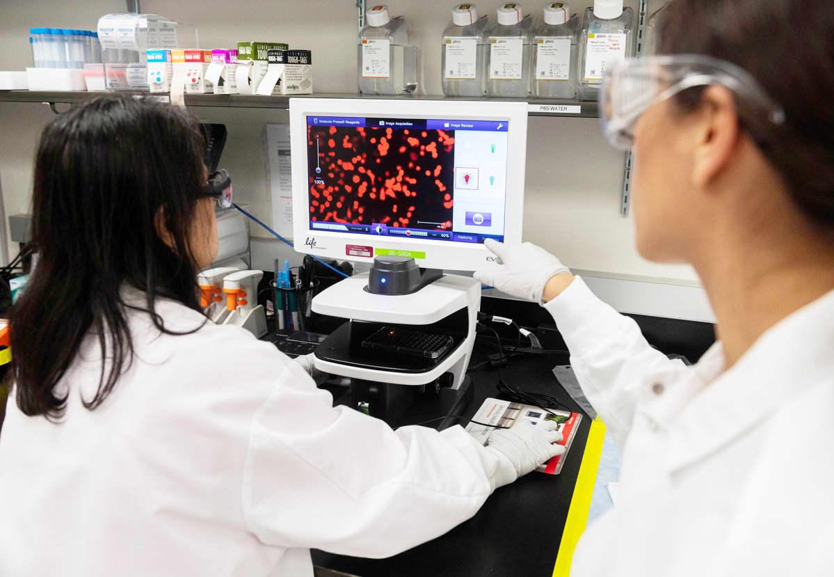Tutkija tutkivat koronavirusta Laboratoriossa Marylandssa.