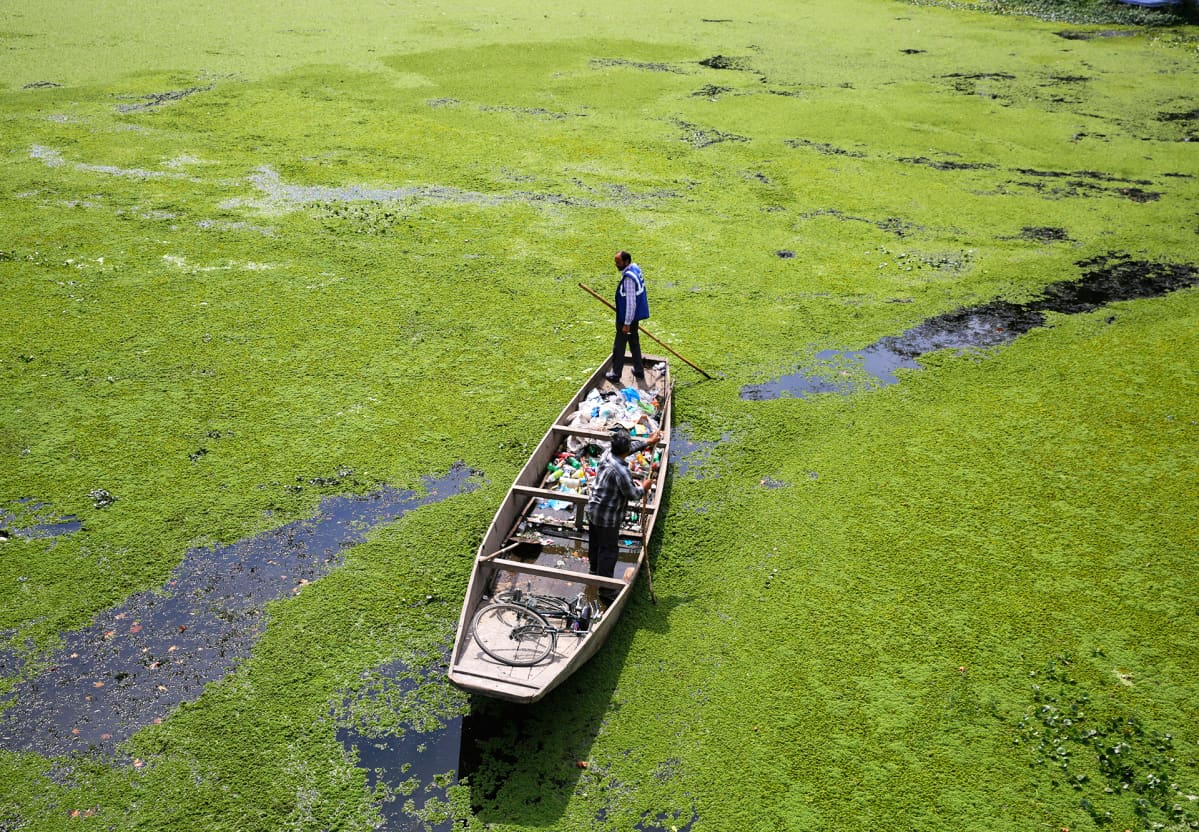 Muoviroskaa kerätään levän peittämästä Dal-järvestä Srinagarissa Intian Kashmirissa.
