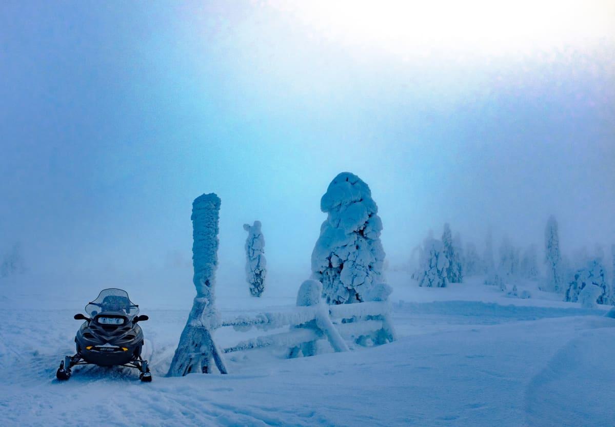 Moottorikelkka talvisessa tykkypuumaisemassa Lapissa