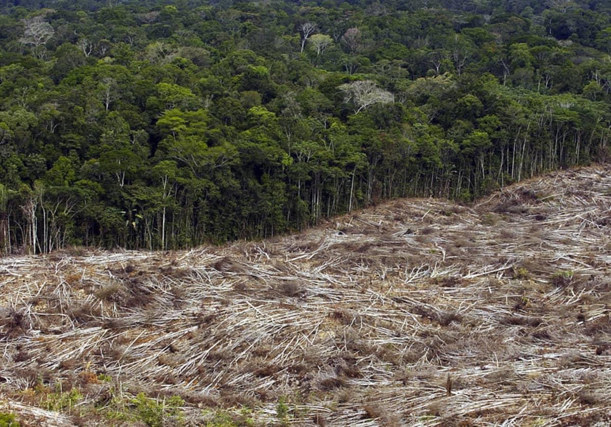 Sademetsän ja hakkuualueen raja