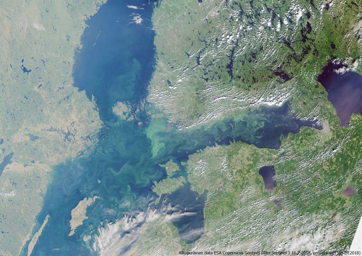 Satelliittikuva havainnollistaa Itämeren sinilevätilannetta. Kuvattu 16.7.2018.
