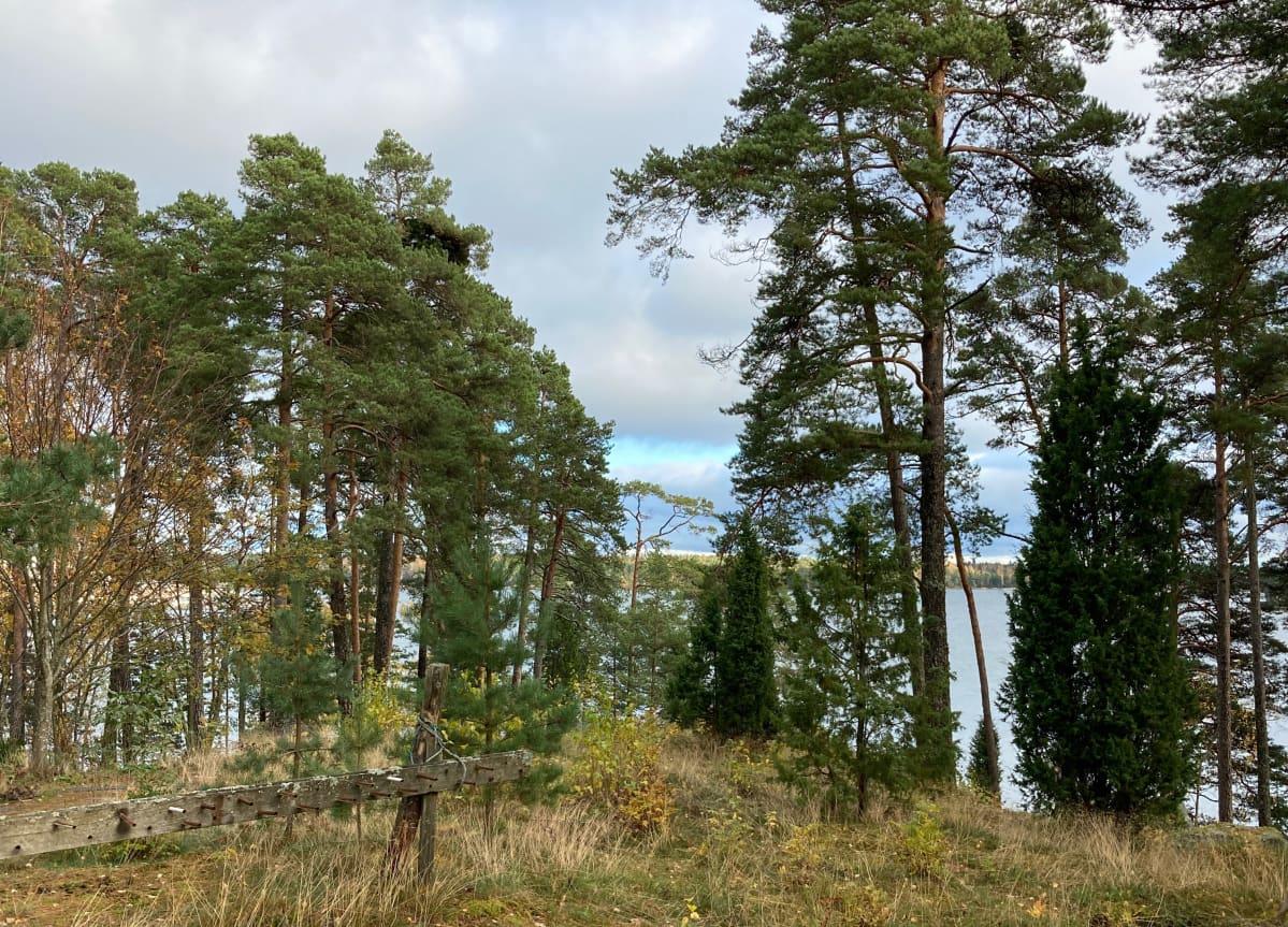 Vallattu kiinteistö sijaitsee arvokkaalla merenrantatontilla Helsingin Vuosaaressa.