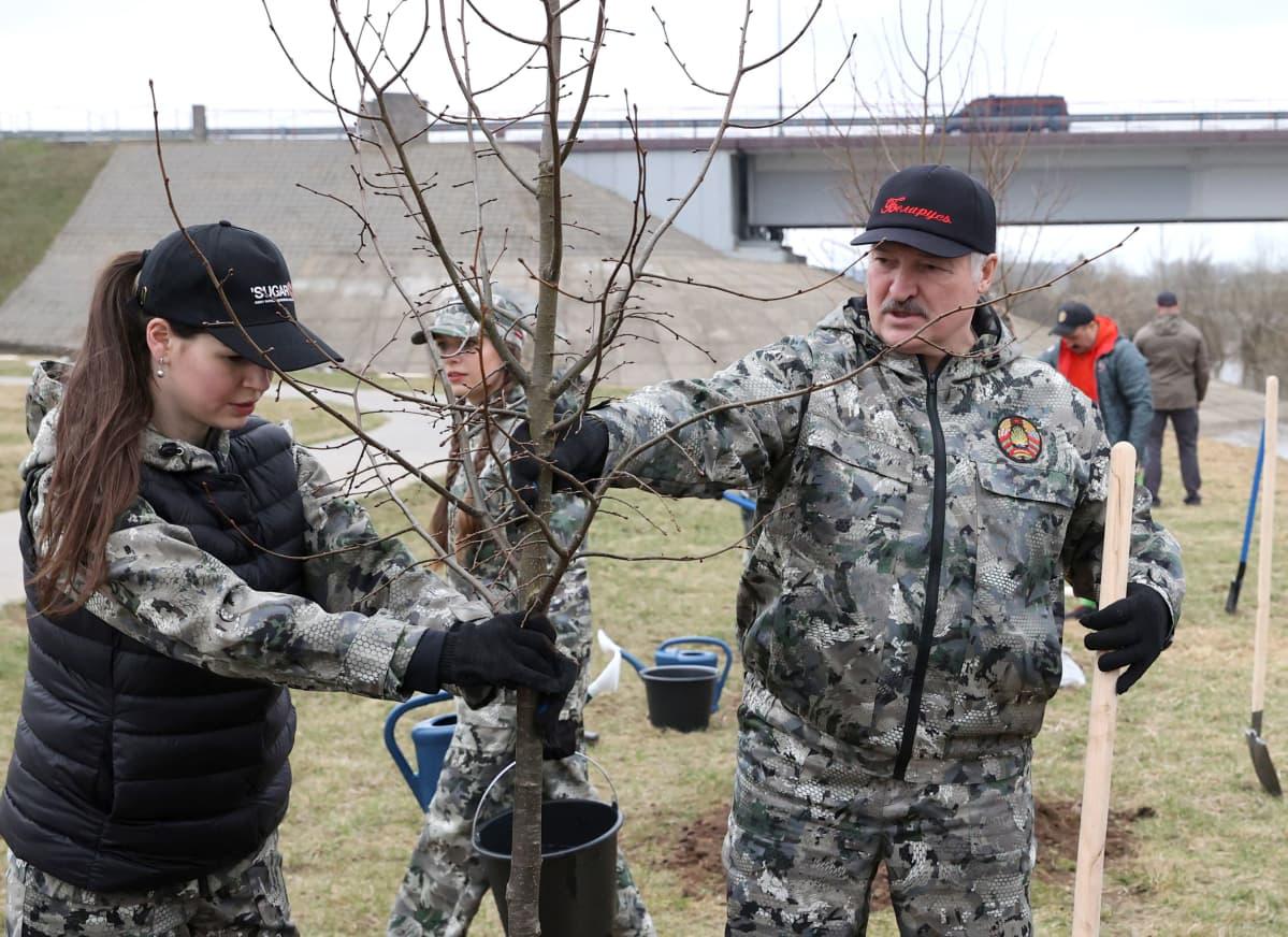 Valko-Venäjän presidentti Aljaksandr Lukašenka istutti puita Aleksandrijan kaupungissa.