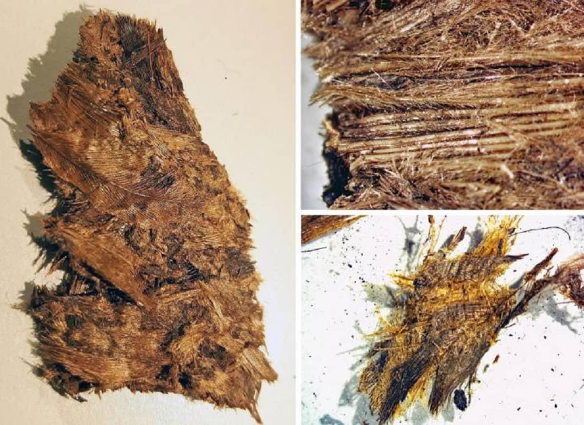 Kolme lähikuvaa tutkimusmateriaalista, josta höyhenet ovat jossakin määrin hahmotettavissa.