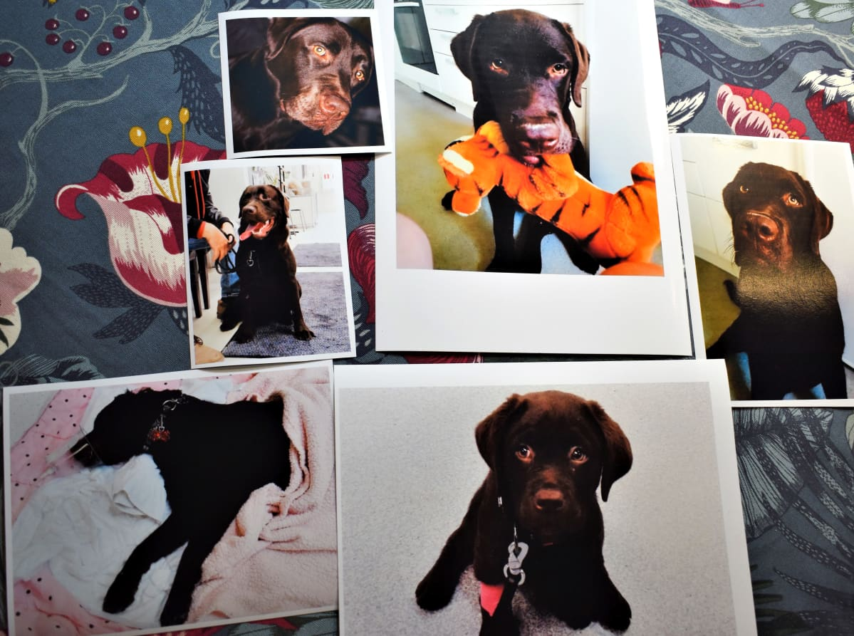 Sanna Uusitorpan kuvia Hannu-koirasta.