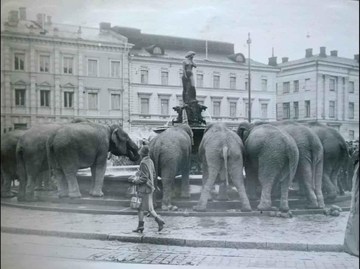 """Myös Kalervo Kanerva kuvasi Mantalla vierailleet norsut. Kuvan lähettäneen Pauli Kanervan mukaan """"hänen faijansa liikkui aina Rolleiflex kaulassaan""""."""