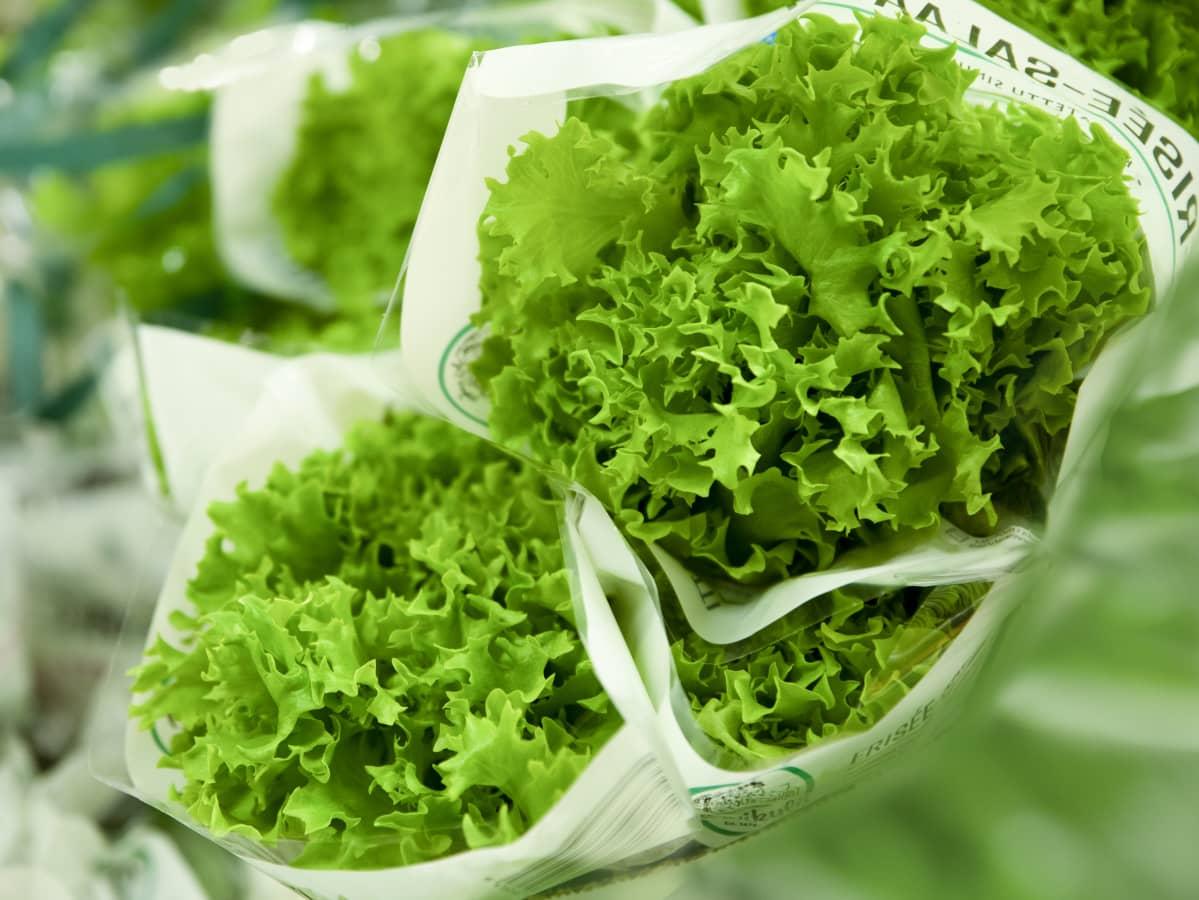 Kotimaiset salaatit kasvatetaan kasvuturpeessa