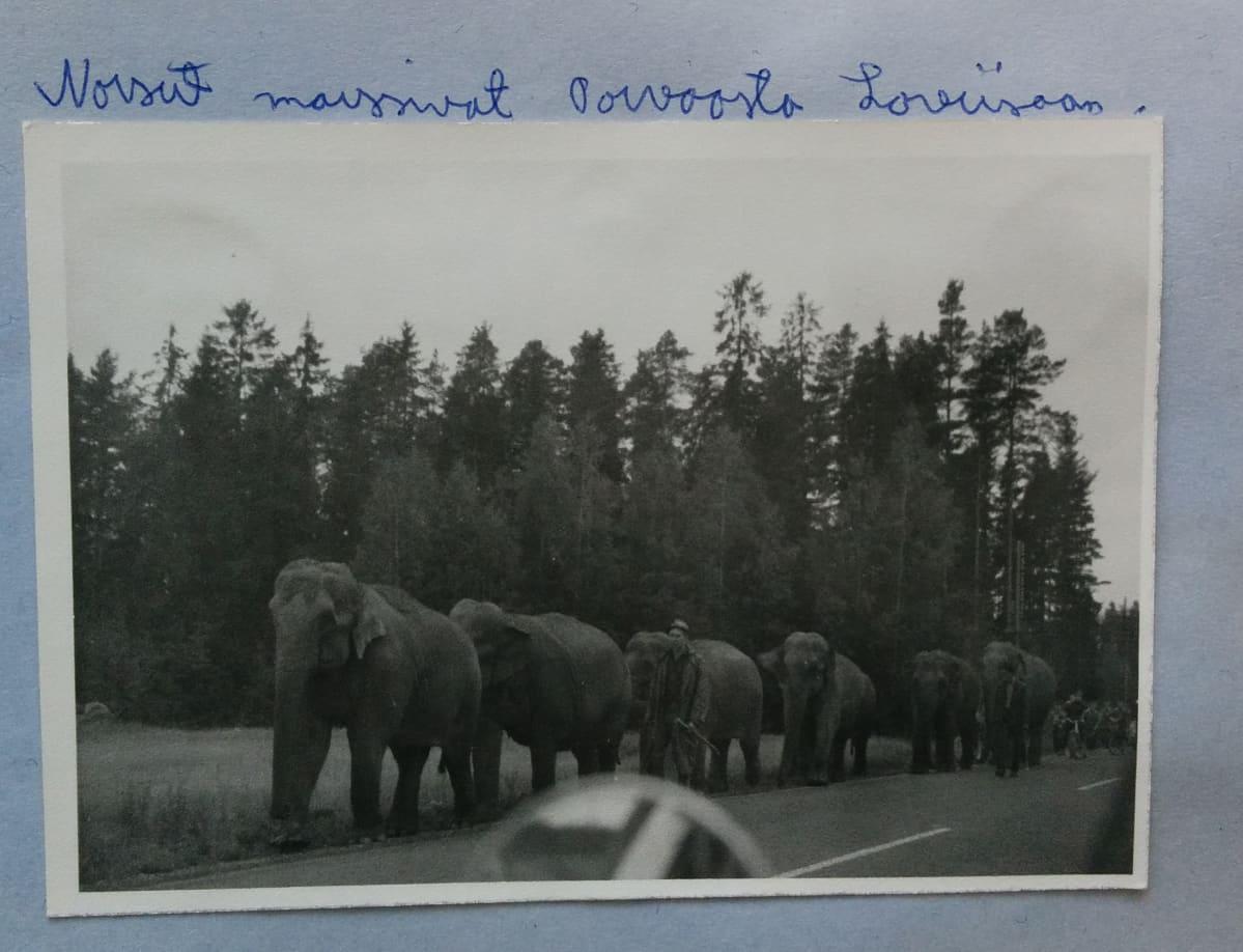 Norsulauma on nähty joskus 1960-luvulla myös Porvoon ja Loviisan välisellä tiellä.