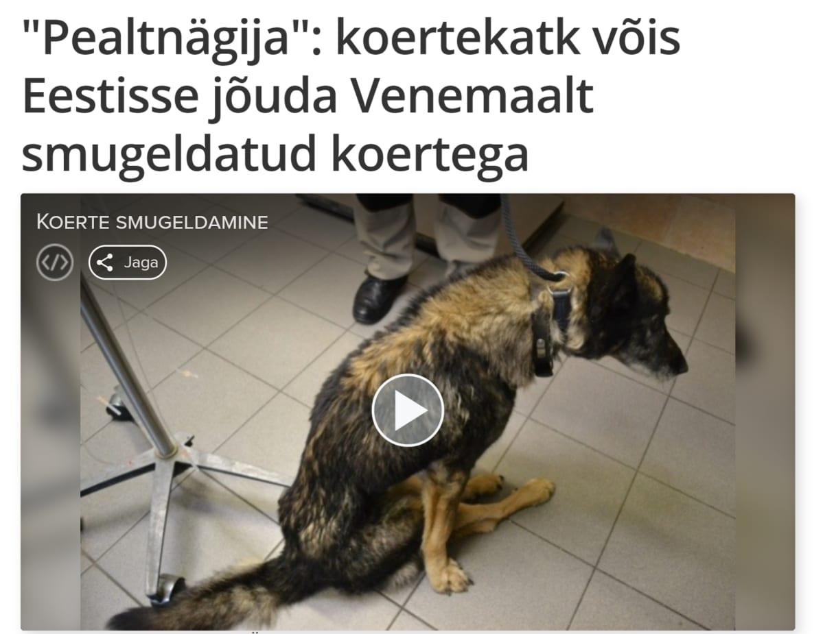 Pealtnägija-ohjelma paljasti Loomade Hoiupaikiin liittyviä ongelmia helmikuussa.
