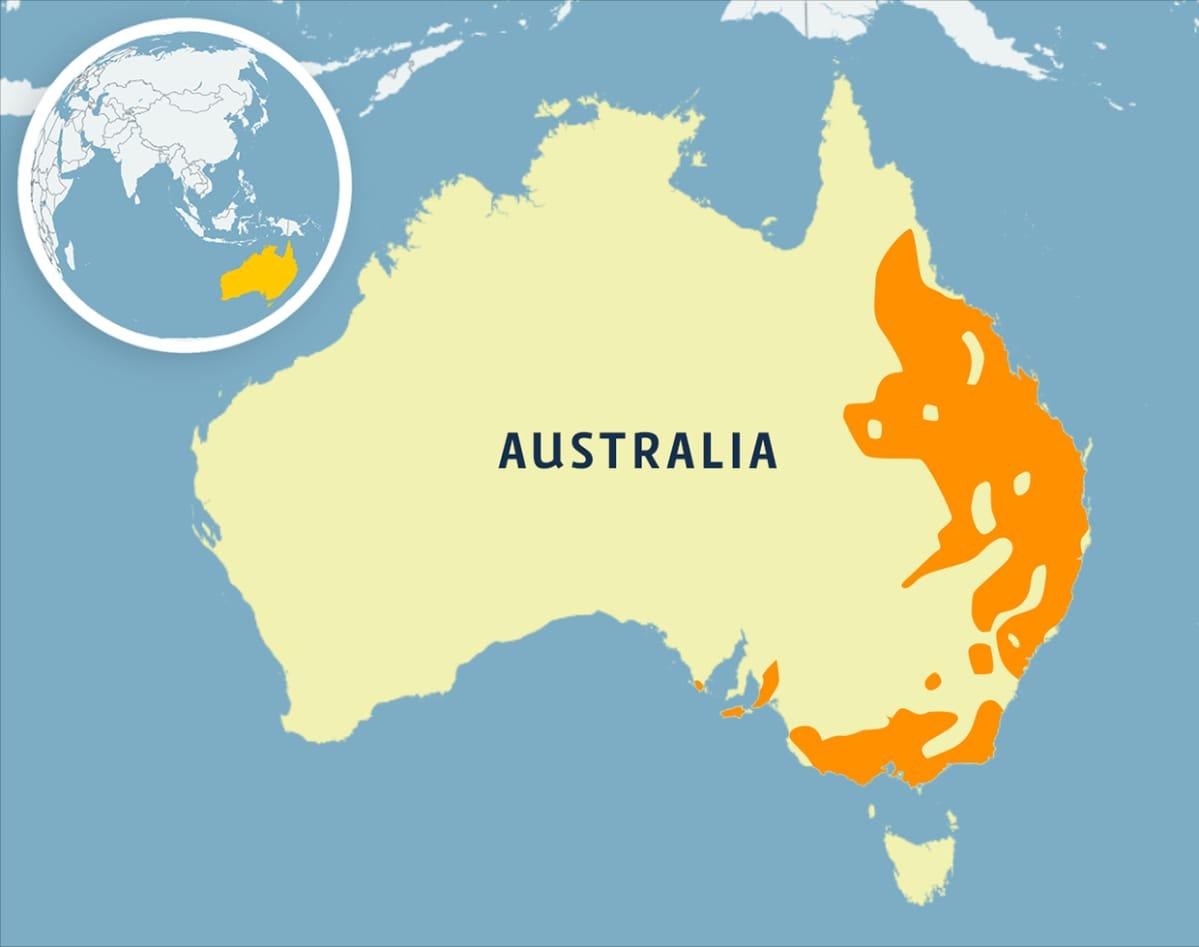 Koaloiden elinalue on pääasiassa itäisessä Australiassa.