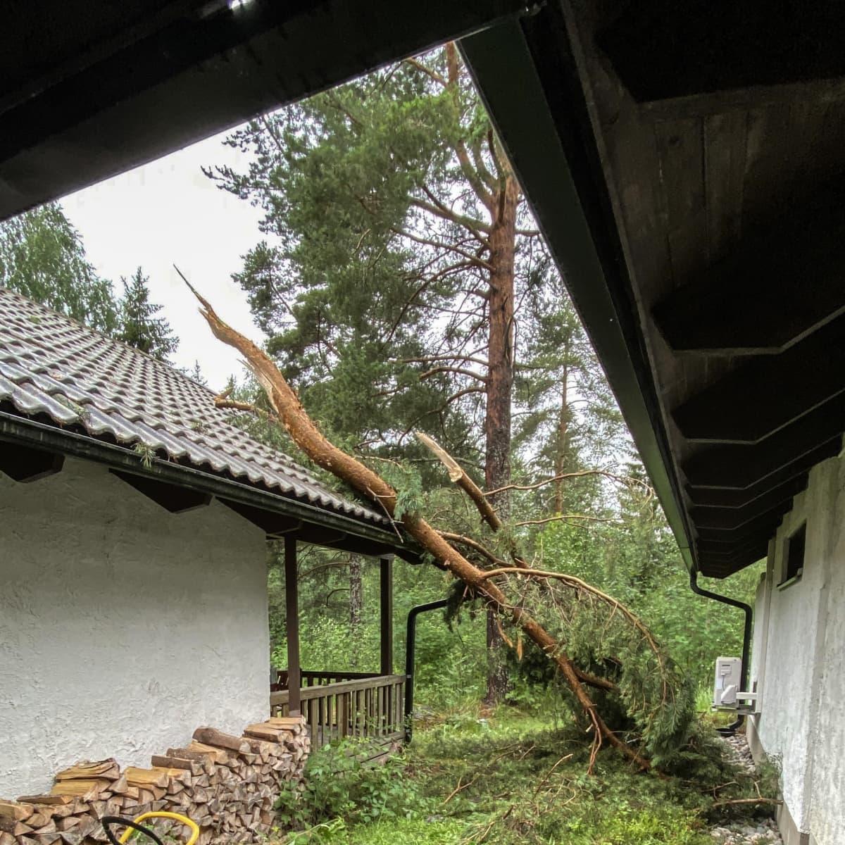 Puu kaatunut talon päälle myrskyssä.