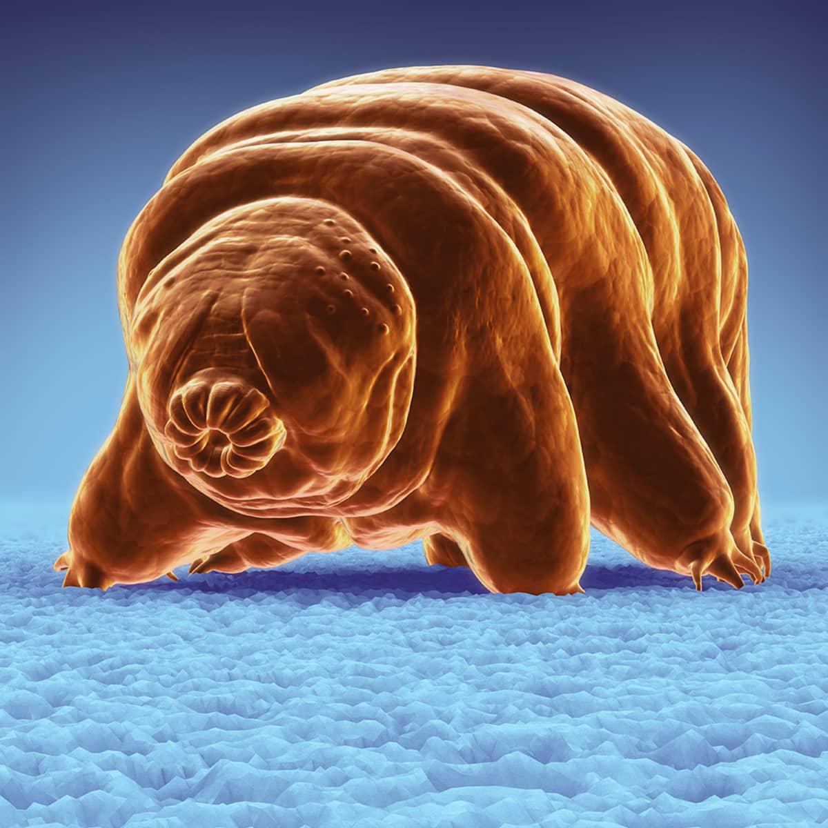 Karhukainen on mikroskooppisen pieni eläin.