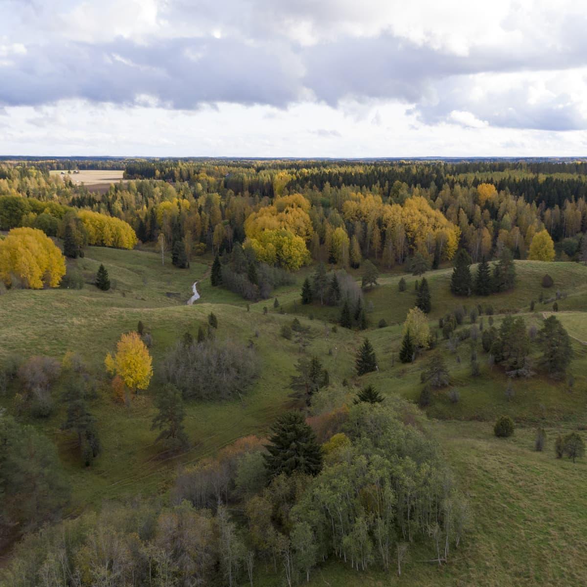 Ilmakuva Häntälän notkoilta Somerolta, puissa on ruskan värit.