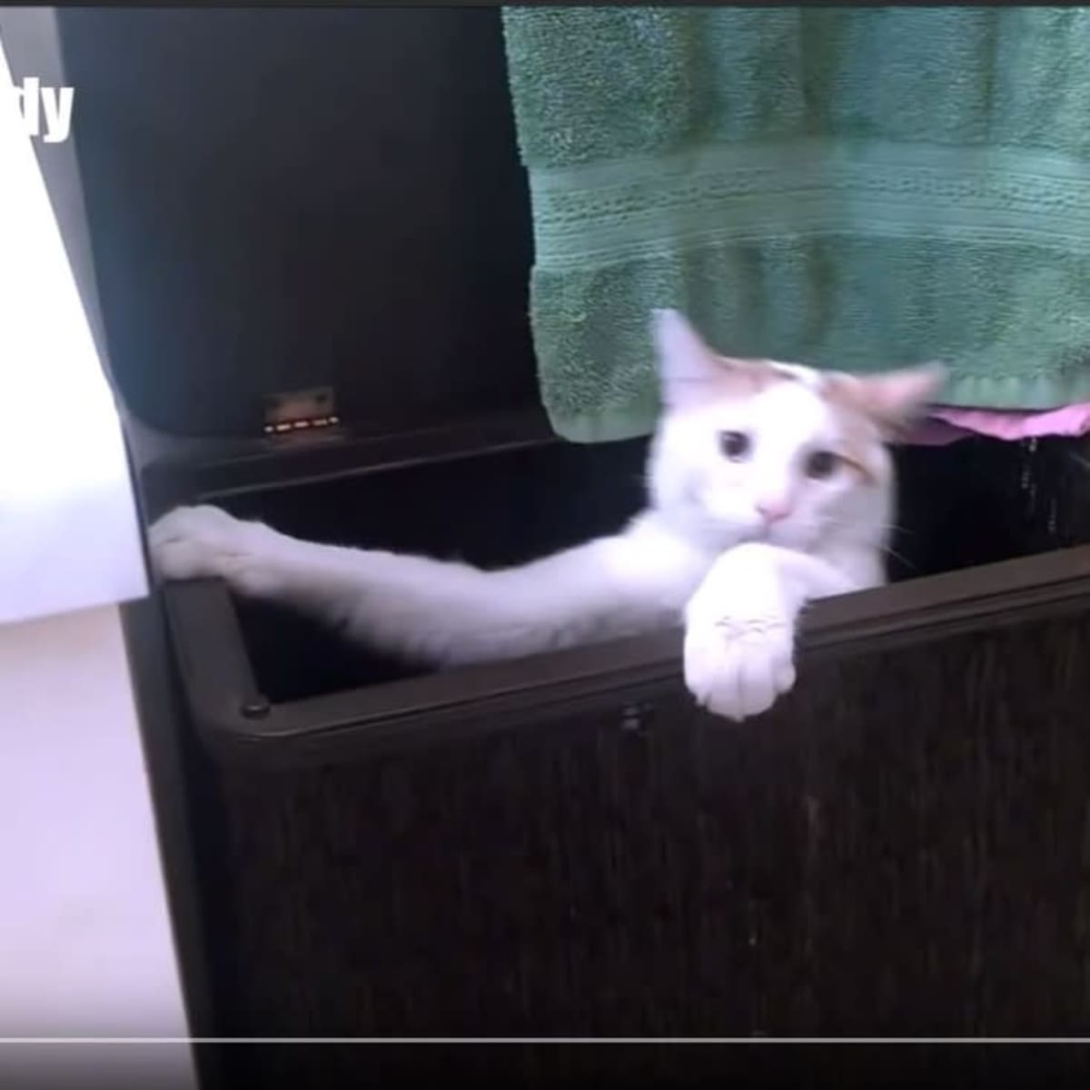 Kuvakaappaus Youtube-videosta: kissa roikkuu laatikon reunoista.