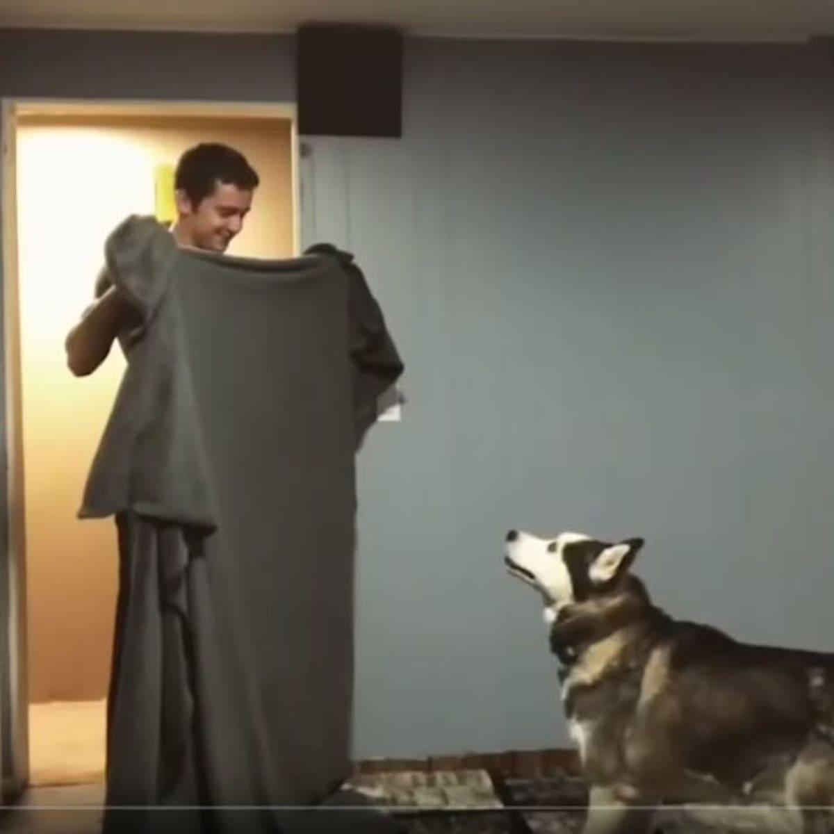 Kuvakaappaus Youtube-videosta: Mies seisoo pidellen peittoa edessään. koira tuijottaa miestä.
