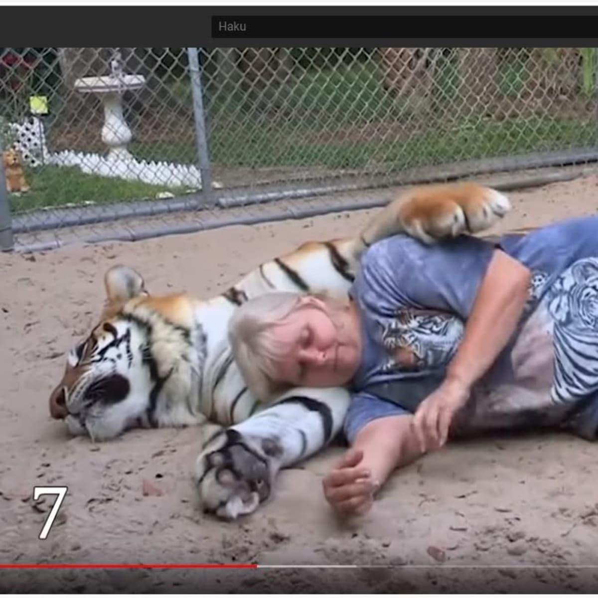 Kuvakaappaus Youtube-videosta: nainen makaa makaavan tiikerin kainalossa.