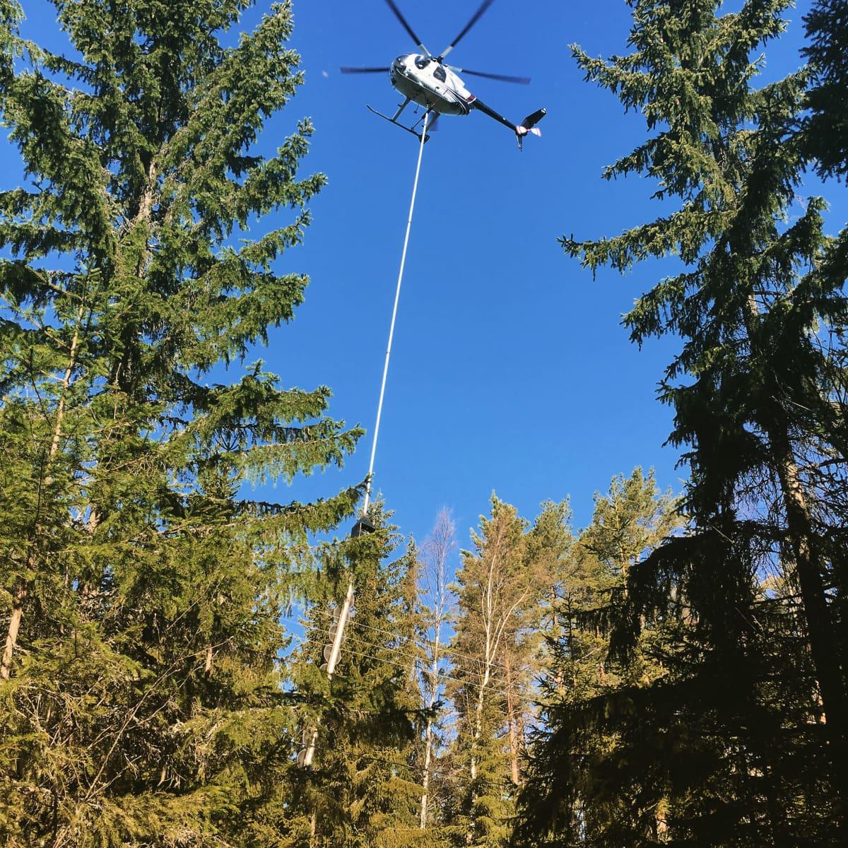 Puita raivataan helikopteriin kiinnitetyn raivaussahan avullla.