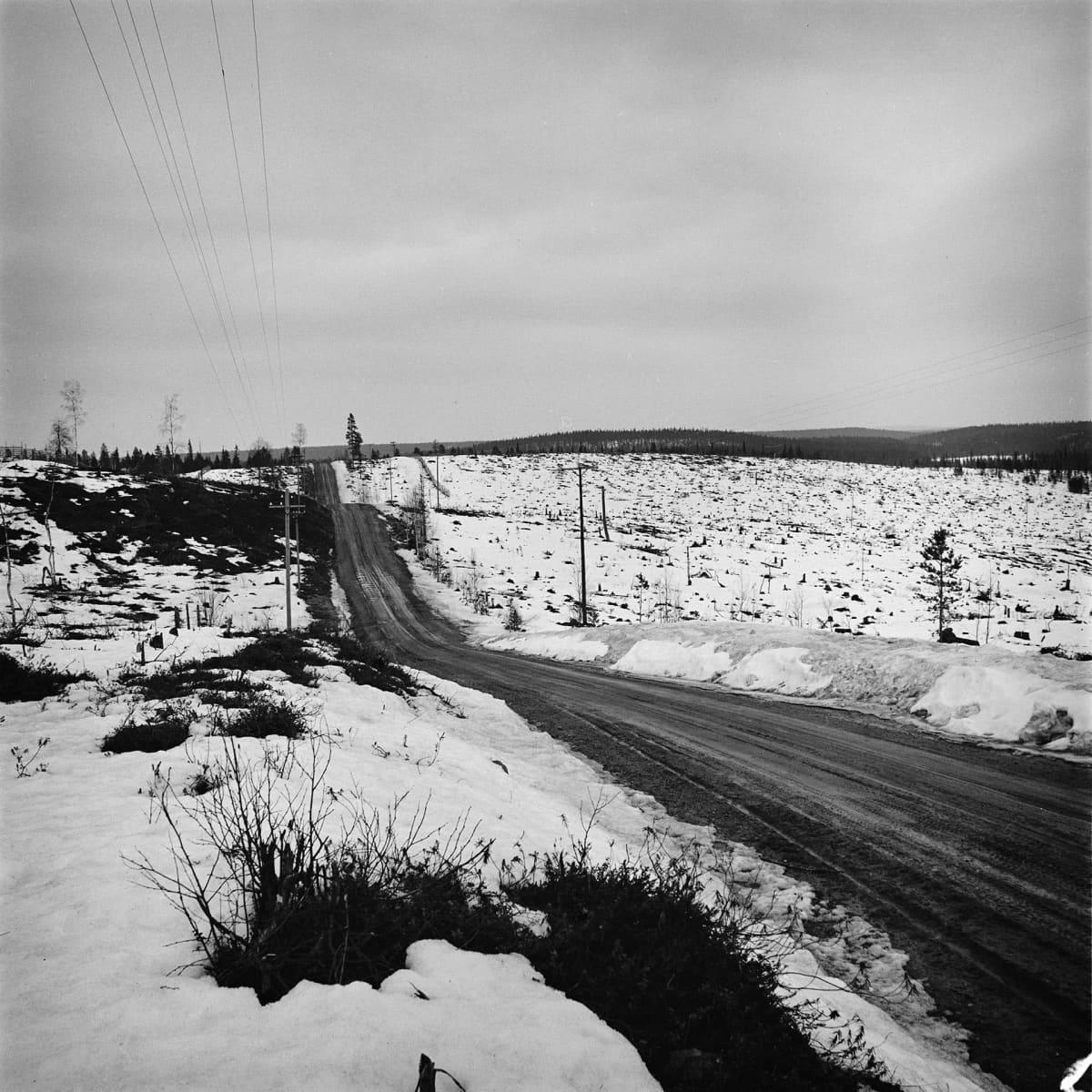Avohakkuualue Kuusamossa 1966
