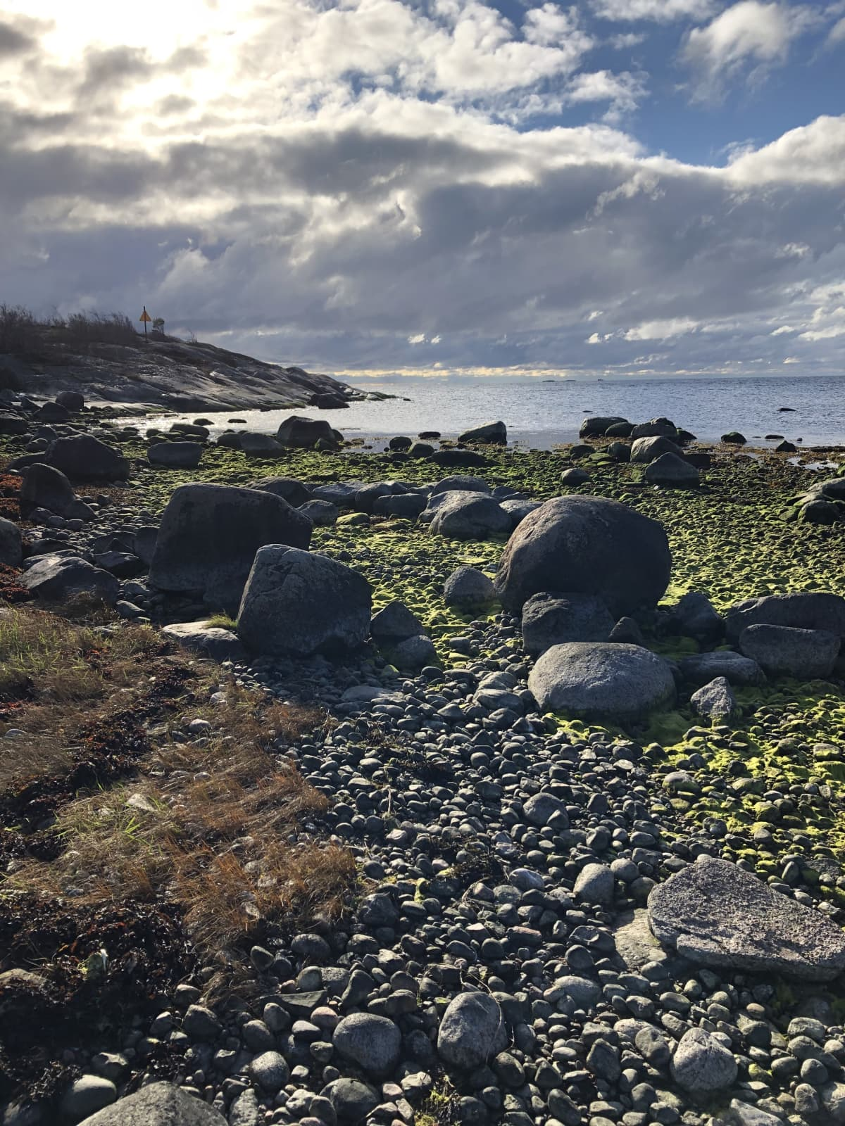 Merimaisema Örön saarelta