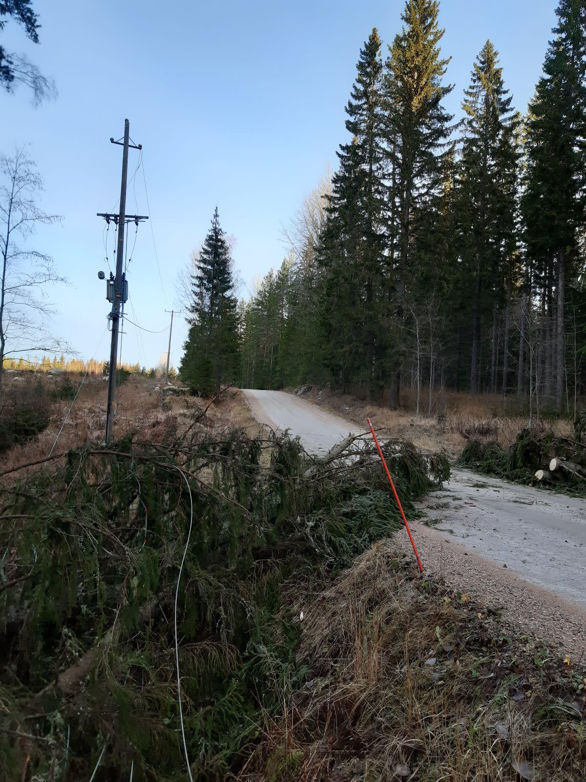 Myrskyn metsätielle Jämsässä kaatamia kuusia, jotka on jo sahattu poikki.