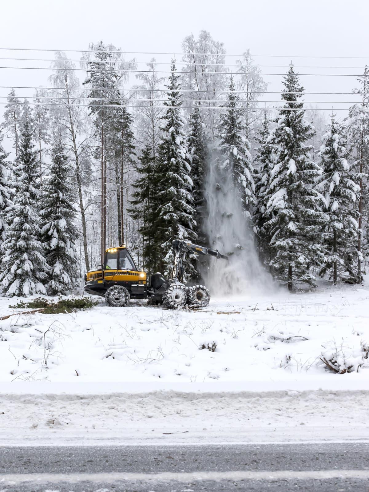 Metsäkone kaataa puuta tienvarressa.