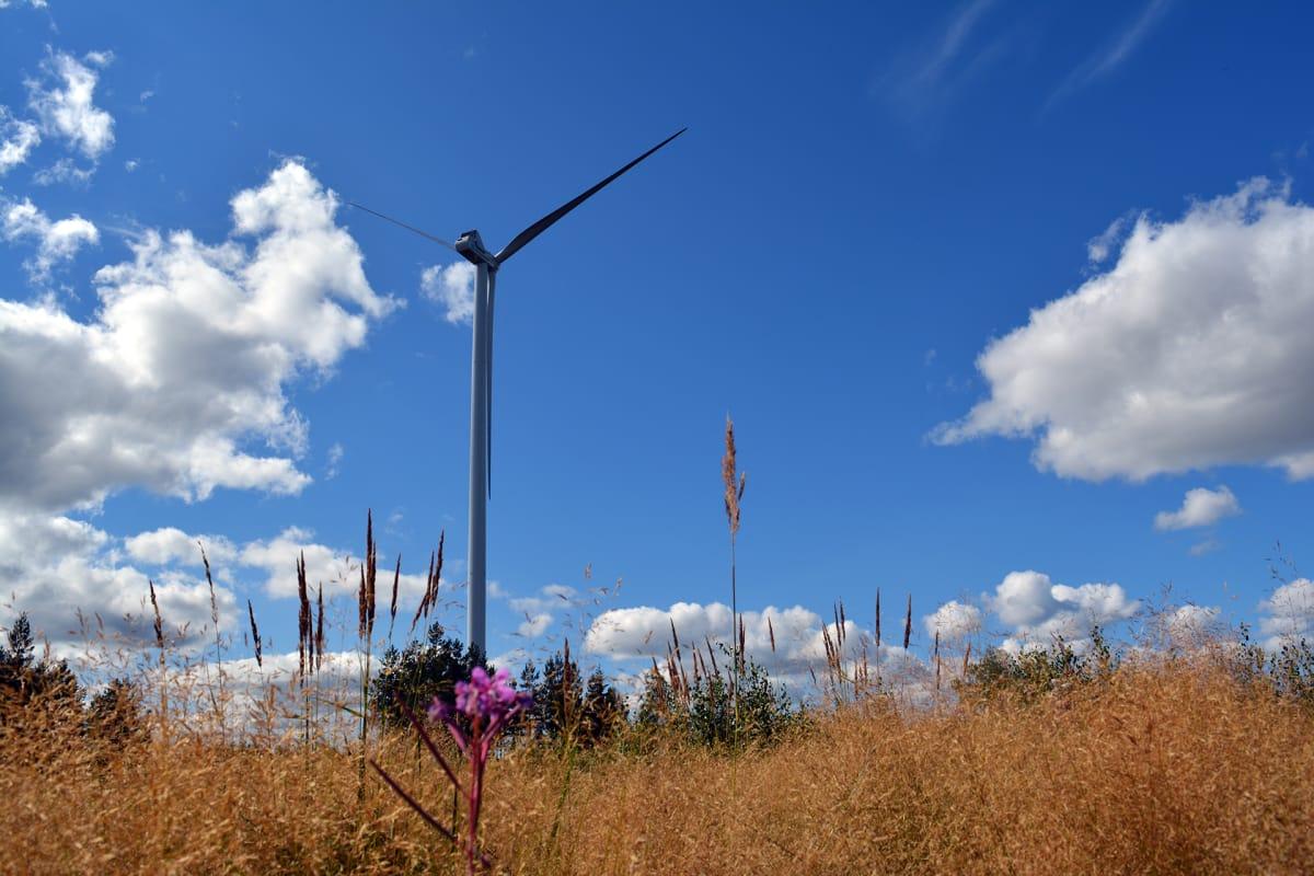 Image result for Tuulipuistot tarjoavat energiaa myös sähkösyöpöille yrityksille