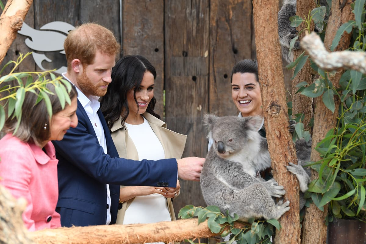 Harry, Meghan ja koala.
