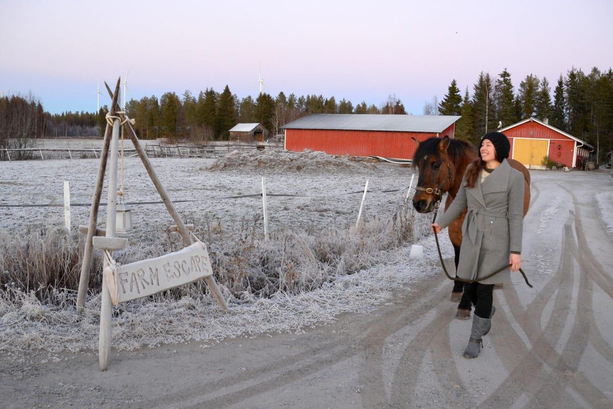 Liisa Koivisto taluttaa hevosta maatilansa pihatiellä Torniossa.