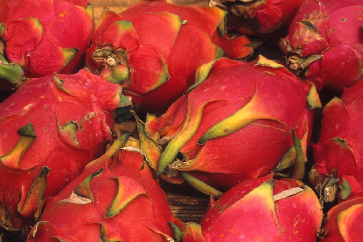 Punaisia pitaija-hedelmiä lähikuvassa