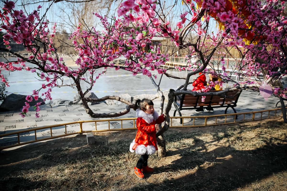 Kiinalainen pikkutyttö poseeraa kukkivan puun juurella Pekingissä.