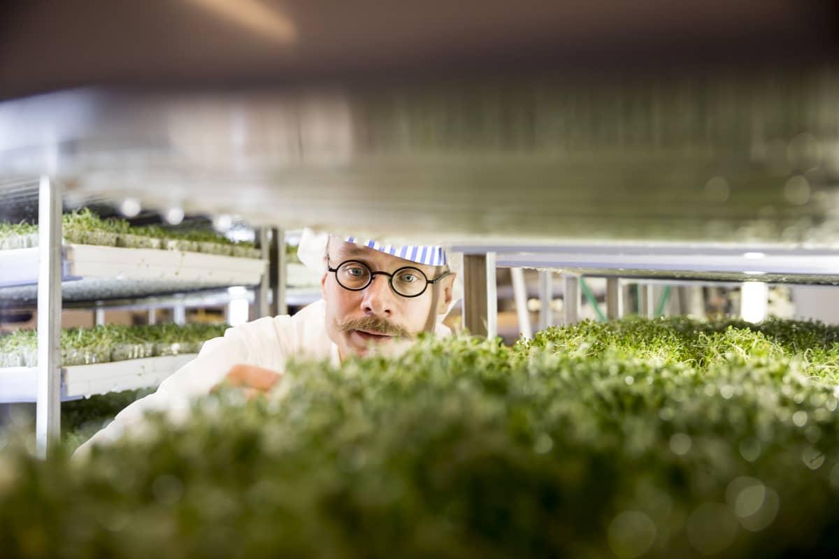 mies ja kasveja kasvihuoneessa