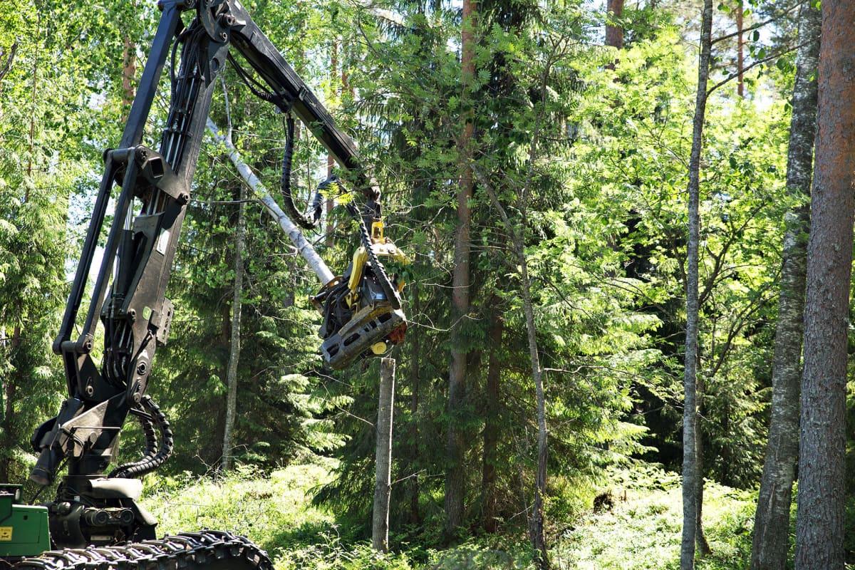 Metsäkone korjaa puita.