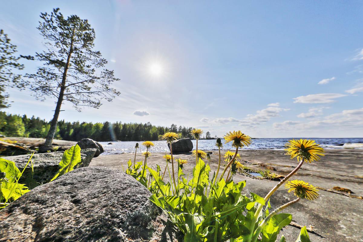 Maisema Juuan Paalasmaalta Pielisen rannasta.