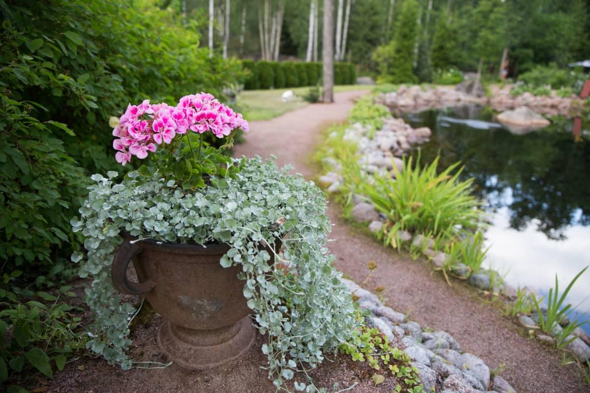 eija´s garden lampi ja asetelma