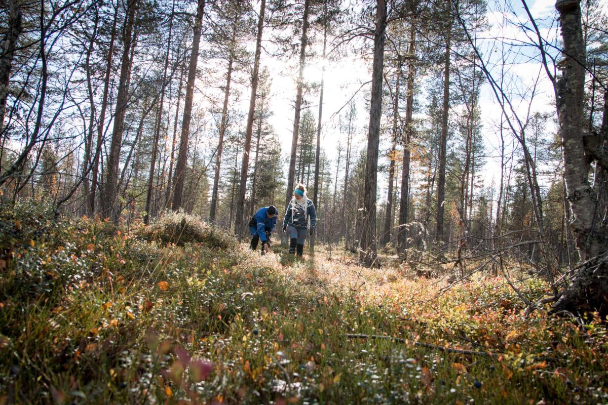 Raekallion perhe kerää metsästä marjat, sienet, pakurit, pihkat ja kuusenkerkät. Metsästä on otettu myös polttopuut ja sahatavaraa, jota sahattiin aiemmin myytäväksi asti perheen omalla sahalla.