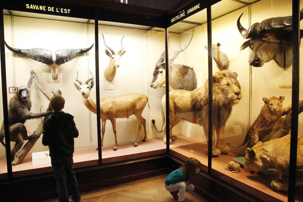 Lapset tutkivat eläinkokoelmaa Brysselin Afrikka-museossa.