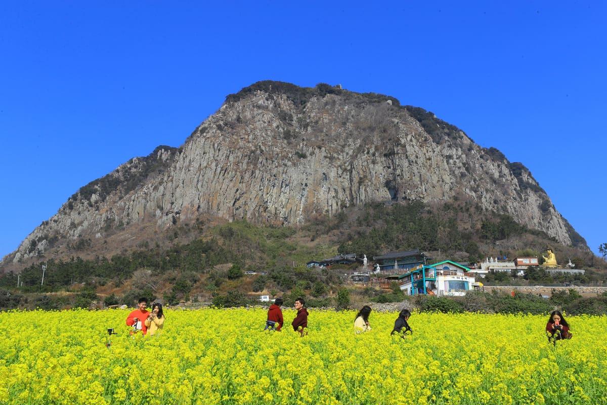 Turisteja rapsipellolla Etelä-Korean Jeju-saarella 13. helmikuuta.