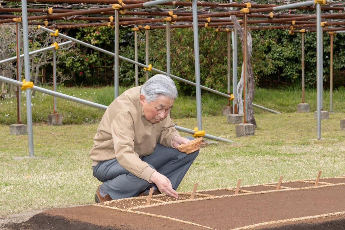 Huhtikuu 2019. Kruunusta tänään luopuva Akihito istuttaa riisiä Tokion keisarillisen palatsin pihalla.
