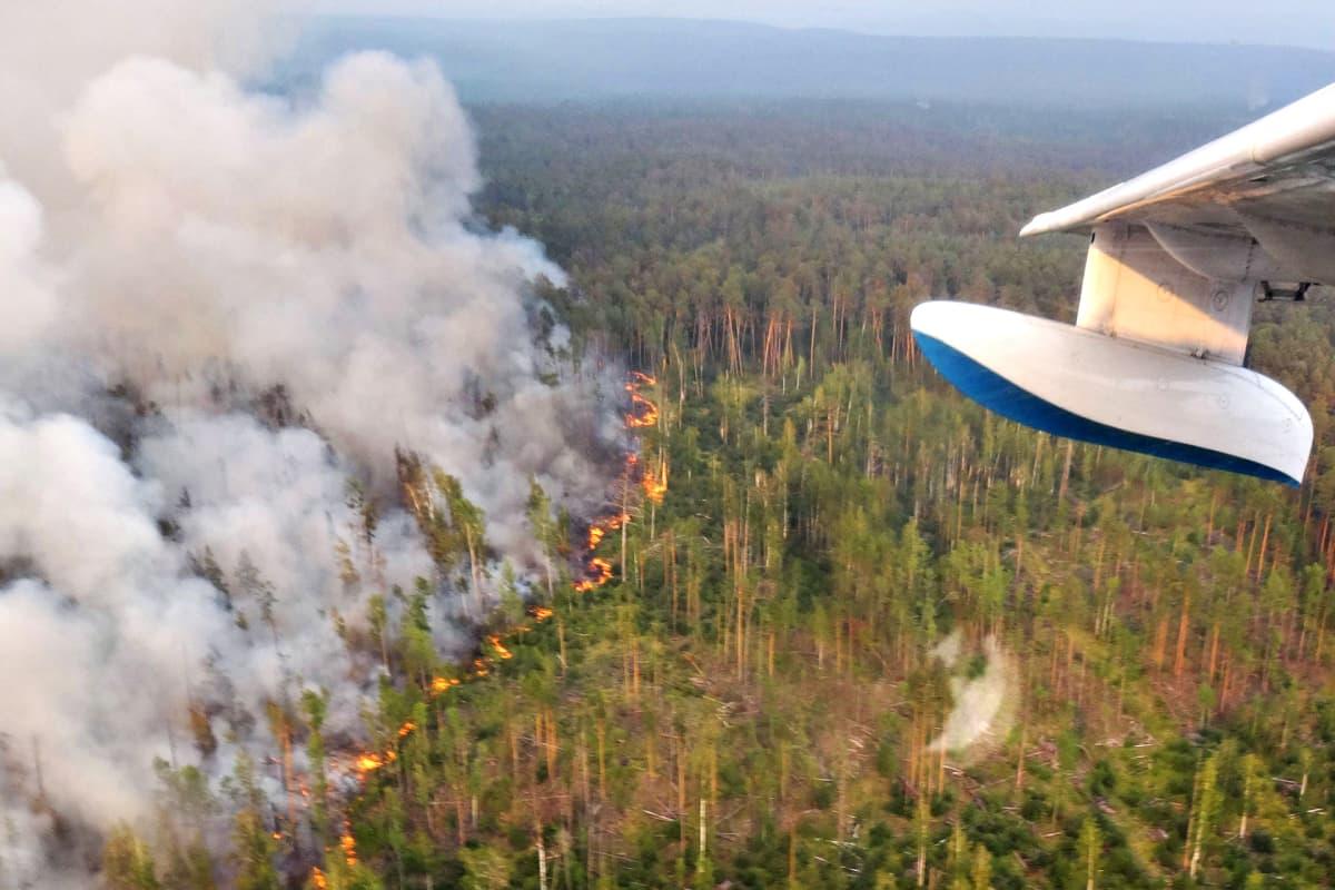 Be-200 -palontorjuntalentokoneesta otettu valokuva Krasnojarskin aluepiirin alueella tiistaina 30. heinäkuuta.