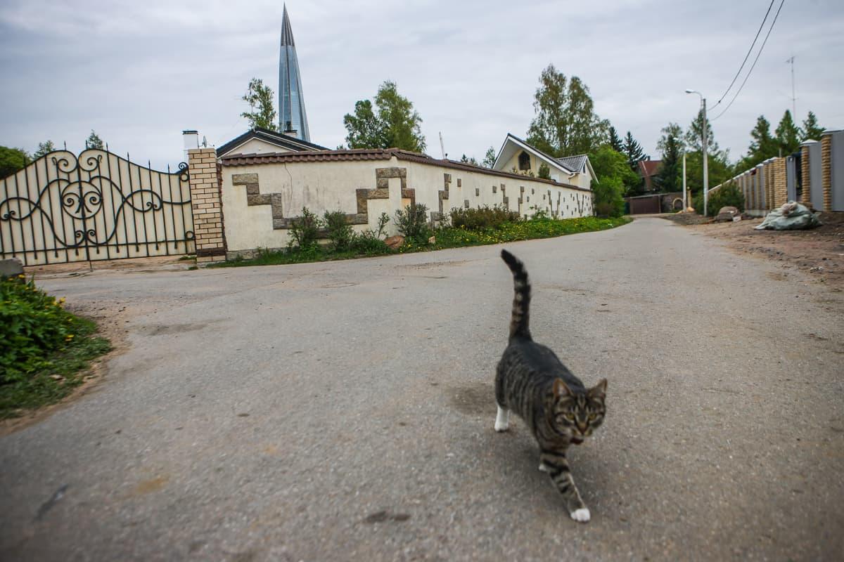 Katunäkymää, taustalla muuri ja Lahta-keskus, etualalla kissa