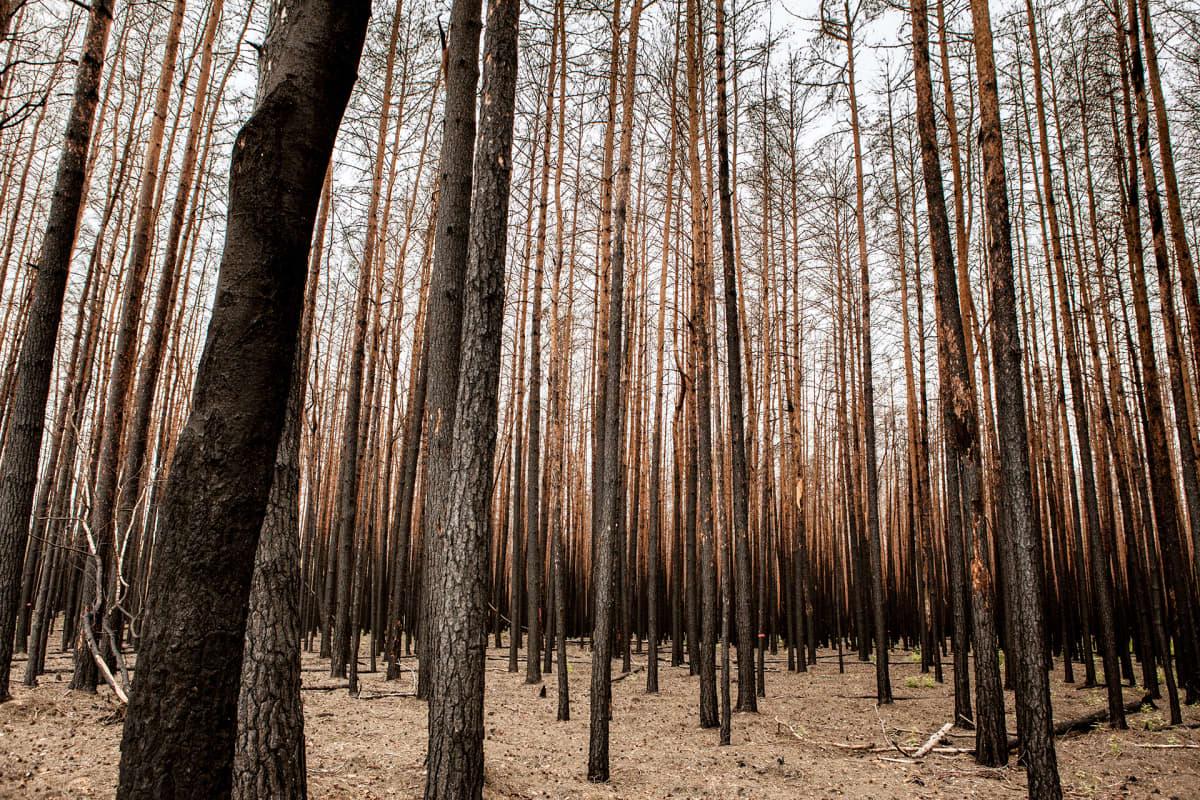 Treuenbrietzenissä paloi vuosi sitten noin neljäsataa hehtaaria metsää. Sammutustöitä vaikeutti matkapuhelinverkon puuttuminen alueelta.