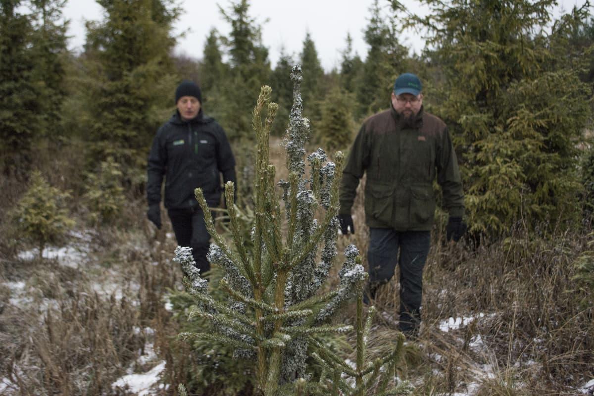 Suomen Metsäkeskuksen metsänhoidon johtava asiantuntija Markku Remes (vas.) ja iisalmelainen Pasi Berg.