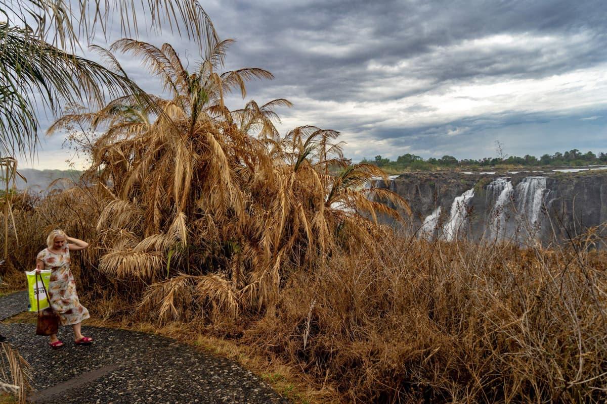 Turisti kävelee polkua pitkin kuivuudesta kärsivässä sademetsässä Victorian putouksien lähellä 3. joulukuuta 2019.