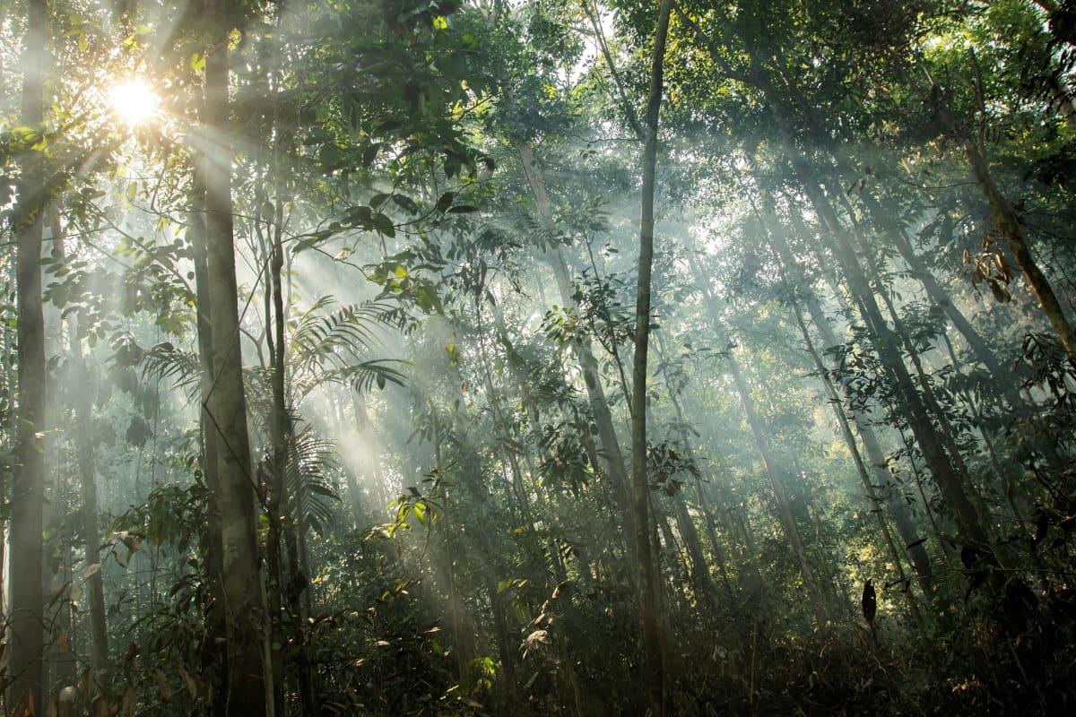 Brasilian sademetsä