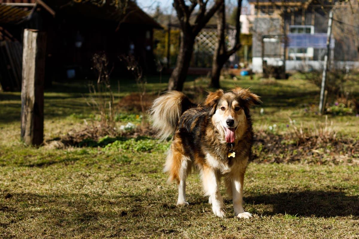 Koirien turvakoti Virossa