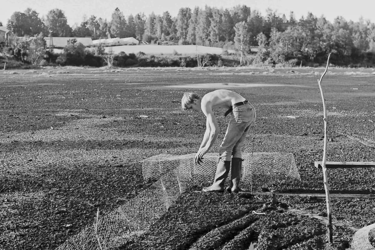 Rengastaja Juhani Vuorinen pyydyksineen Lielahden jätelietteellä