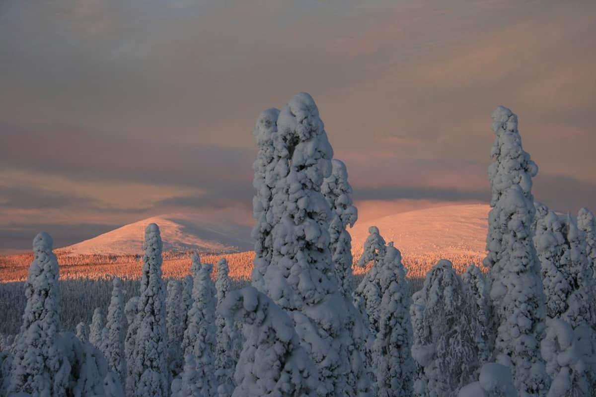 Pallas-Yllästunturin kansallispuisto talvella.