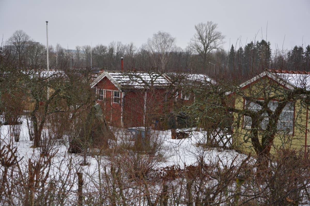 Kupittaan siirtolapuutarha talvella